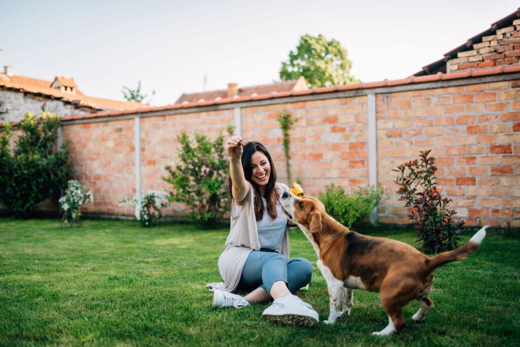 soin quotidien chien