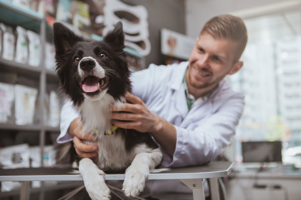 soins quotidien chien