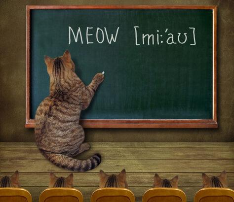 langage chat
