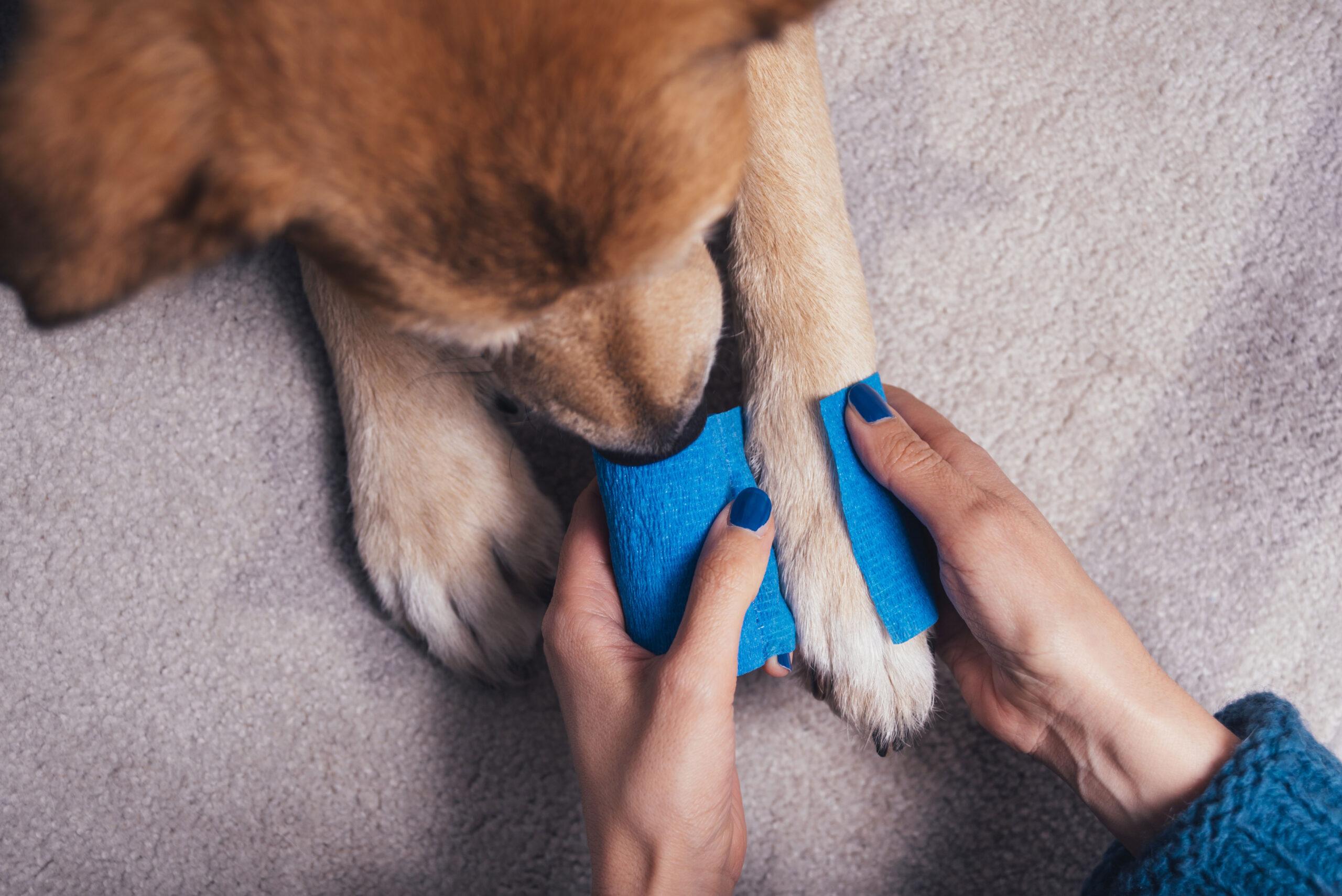 blessures chien