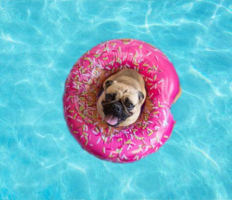 chien période estivale