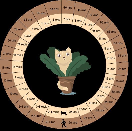 âge humain chat