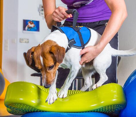 proprioception chien