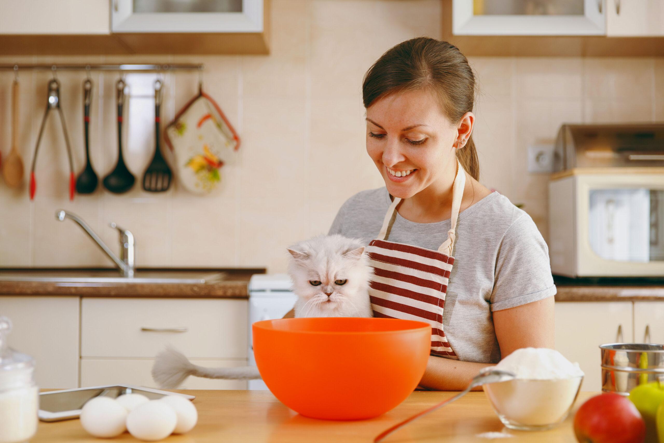 recette friandises pour chat