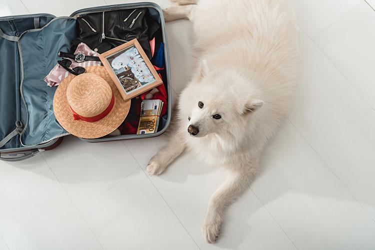 partir en voyage avec son chien