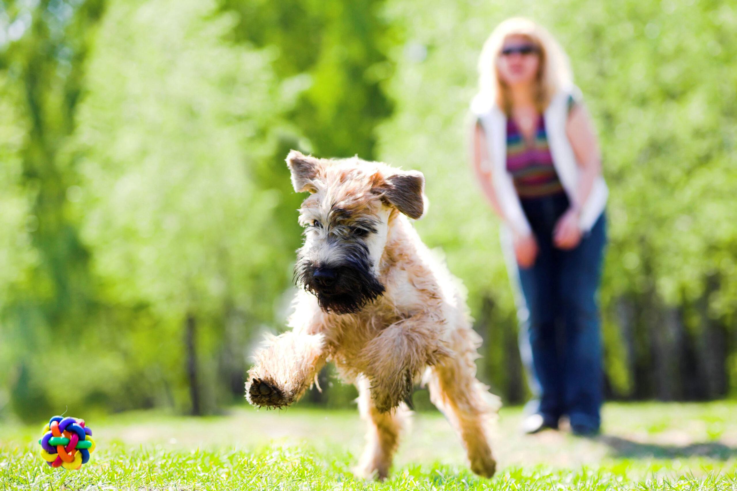 jouer avec un chien